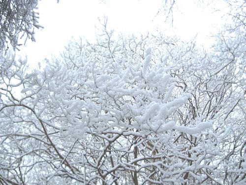 snow209.jpg